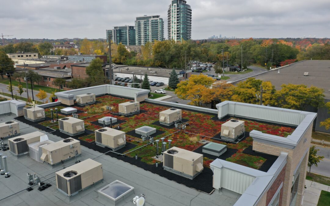 The Green Advantage: Consider A Green Roof For Your Property